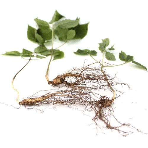 [산삼] 산양산삼 6~7년 3뿌리,