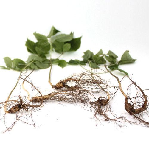 [산삼] 산양산삼 8~10년 5뿌리,